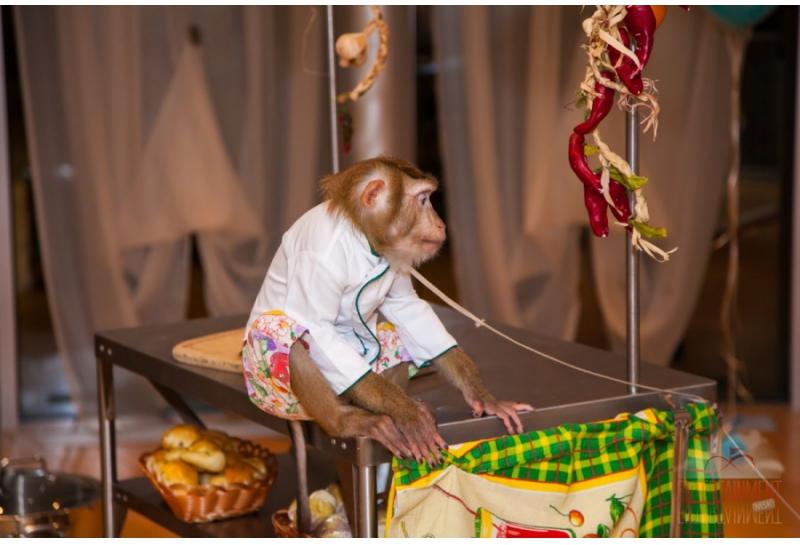 """Дрессированная обезьянка """"Поварёнок"""""""