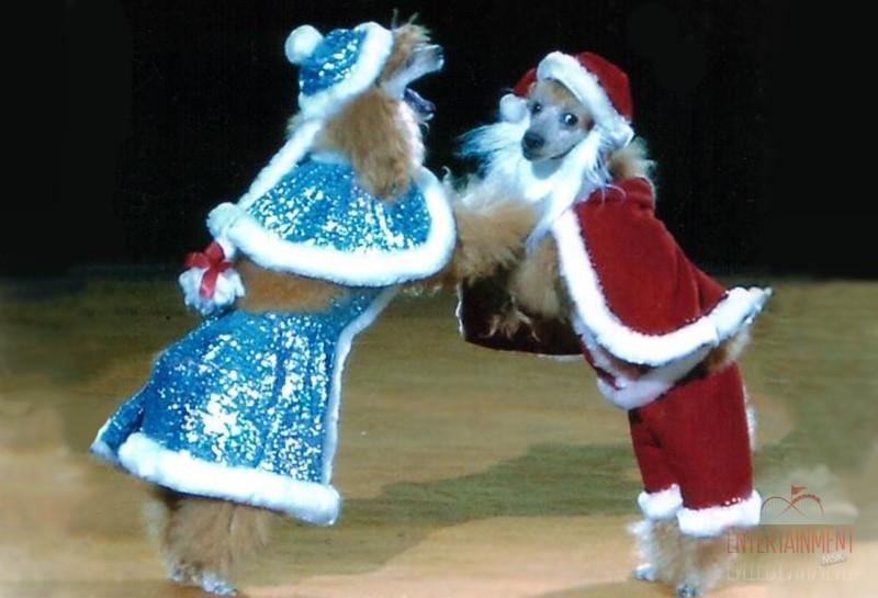 Дрессированные животные на Новый год