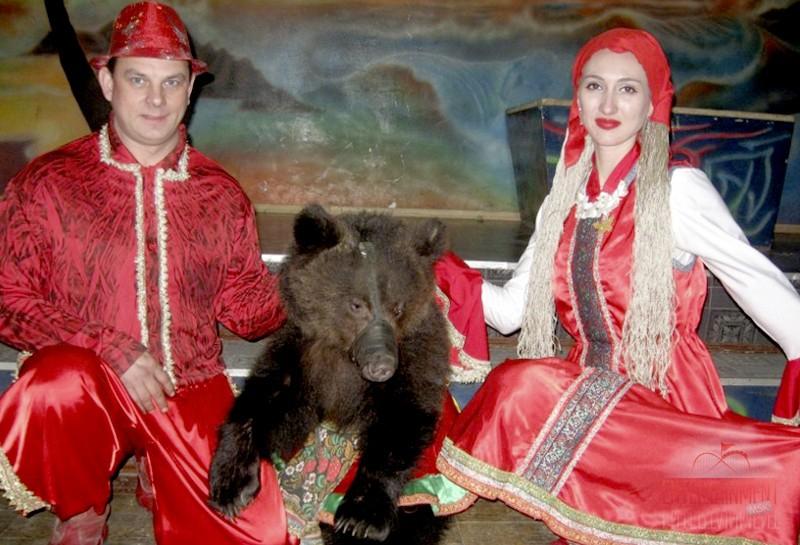 Дрессированные Медведи