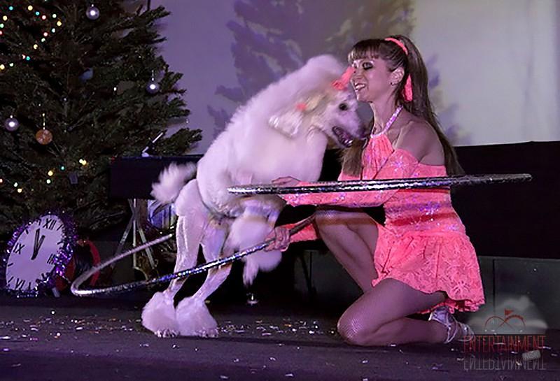 Хула-хупы и собака