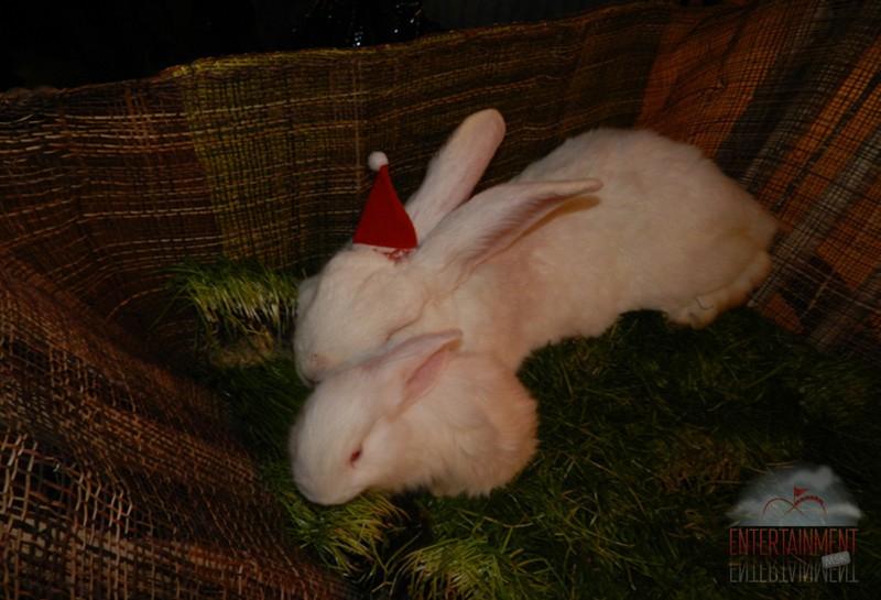 Кролик в аренду для фотосессии