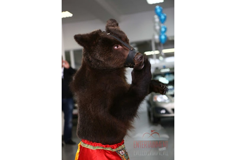 Дрессированная медведица Машенька