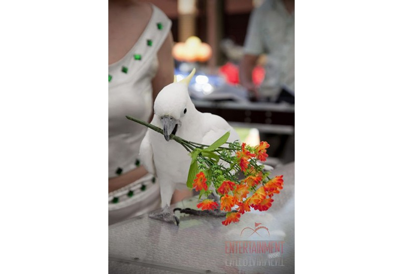 Ольга и её попугаи