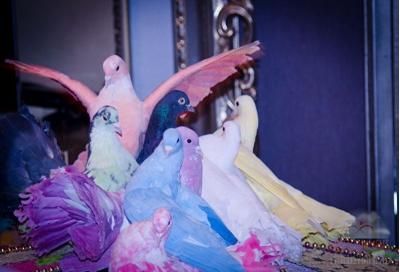 Шоу с разноцветными голубями