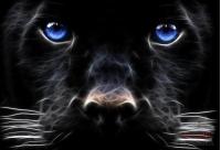 дрессированная пантера