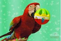Попугаи Лелик, Муха и Кеша