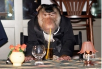 Обезьяна в ресторане