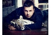 Дрессированные Тигры